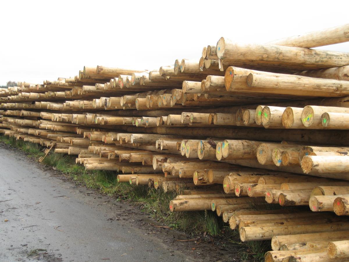 Poteau téléphonique bois